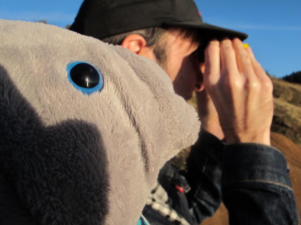 Manatee looks for whales on the Oregon coast.