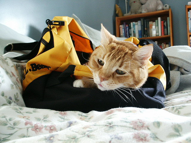 Cat in a duffel bag hee hee